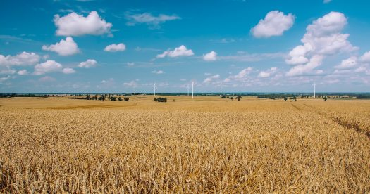 agriculture-countryside-cropland-388413